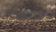 Raindrops fall onto Sonoran desert soil, Arizona, USA. Available in HD.