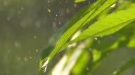 Raindrops Falling On Leaves Close-up