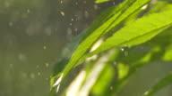 Regentropfen fallen auf Blätter Nahaufnahme