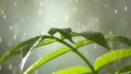 Regentropfen fallen auf Junge Pflanze, Nahaufnahme