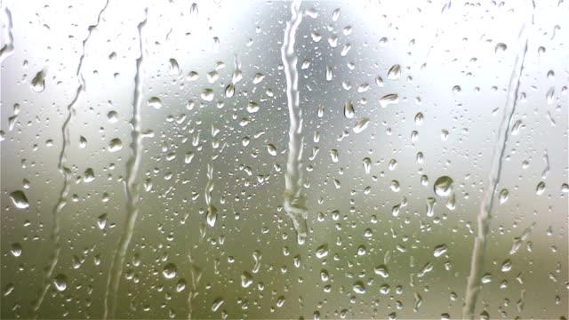 Raindrops on Green Plant Leaves by okanakdeniz_new   VideoHive