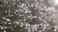 Raindrops on twigs at backlight.