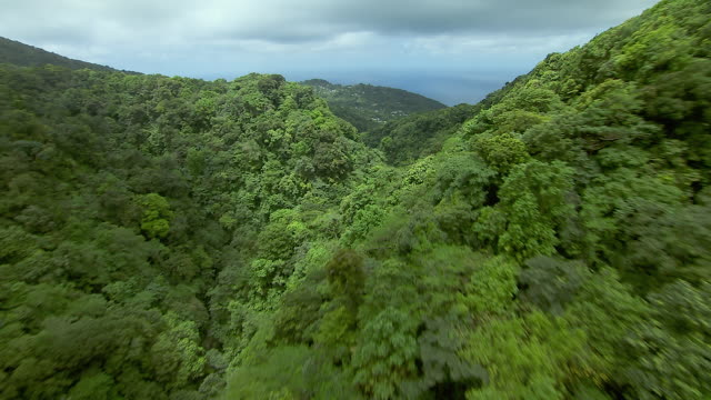 Rainforest And Victoria Falls In Dominica