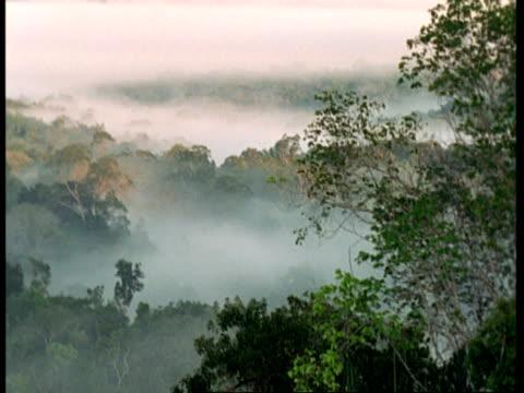 WA Rainforest canopy amongst mist, South America