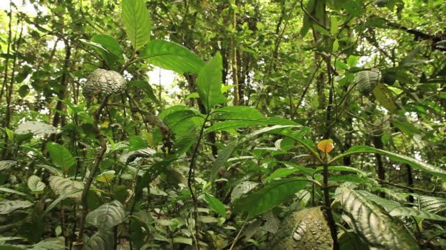 Rainforest Floor HD