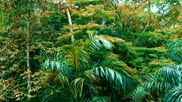 Rainforest plants and trees