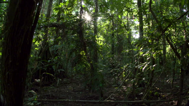 Rainforest Understory, Starburst Sun Peaking Through, forward wide slide, 4K.mov