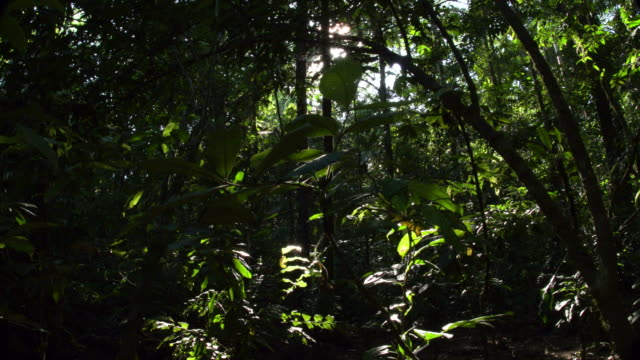 Rainforest understory, starburst sunshine peaking through, 4K left slide