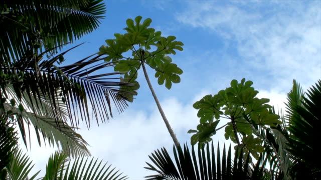 Rainforest-El Yunque