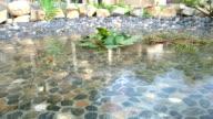 Raining auf Lotus Pool