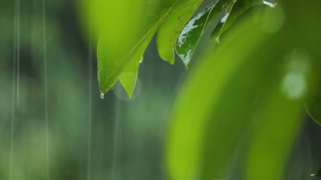 Rainning on Leaf.