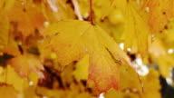 HD: Regentag im Herbst Wald