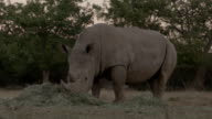 Ranger guarding the rhino with automatic weapons Rhino poaching is a major threat to the extinction of rhinos living in and around nature reserves in...