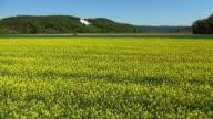 Rapeseed Field in der deutschen Donautal Luftaufnahme der Überführung