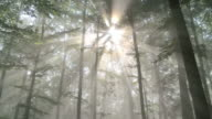 rays of light in forestrays of light in forest