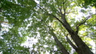 Rays of sunlight shine through a forest canopy. Available in HD.