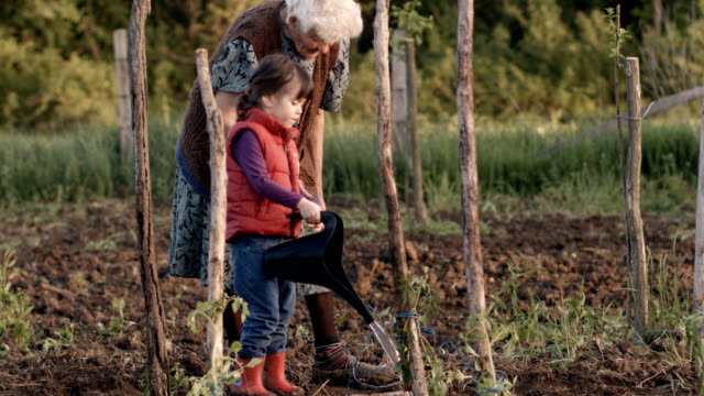 Real People-Senior Woman and Little Girl Planting Tomatoes, Rural Scene