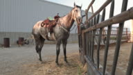 Real time video of horse at ranch in Utah, USA