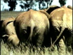MS, Rear view of herd of African Elephant (Loxodonta africana) in field, Tsavo National Park, Kenya