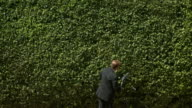 WS Rear view of man in full suit trimming hedge, South Beach, Florida, USA