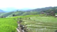hintere Ansicht Tilt: Pa Pong Pieng terrassierten Reisfelder am Berghang