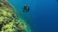 Rebreather Diver filming Reef wall with small orange fish, Egypt, Red Sea