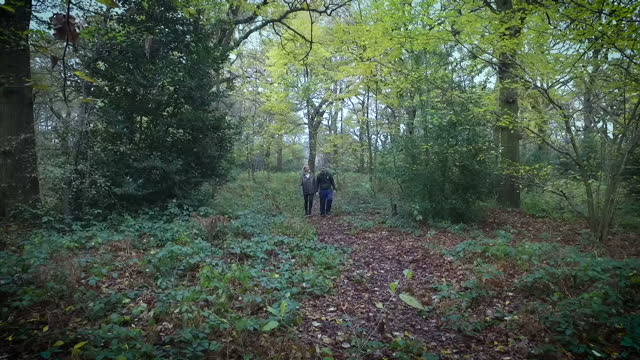A record number of trees are being ripped up by developers at the same time as planting rates are the lowest in nearly 50 years The Woodland Trust...