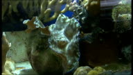 Record seizures of items from endangered species London Zoo Fish swimming in tank Sea anemones in tank Fish swimming in tank with various corals...