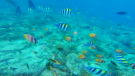 Recording group of colorful fishes during underwater diving in the Gili islands during during travel vacations.