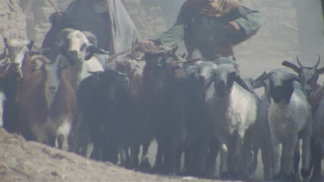 SLO MO, CU, Re-creation, Middle East, Two boys (12-13, 14-15) driving flock of goats through medieval village
