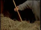 Recreation of 19th Century farmer collecting hay with pitchfork, Sturbridge, Massachusetts\n