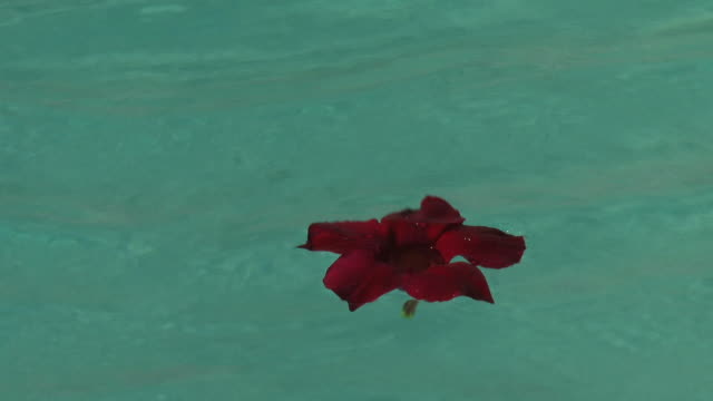 Red flower Floating On Water