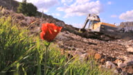 Red flower(Anemone) with bulldozer at work in background