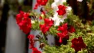 Rote Blumen im Garten