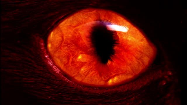 Mostro occhi rosso