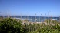 Reeds in Front of Ocean
