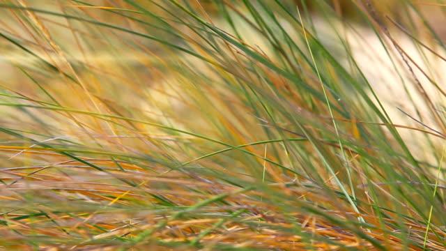 HD: Reeds