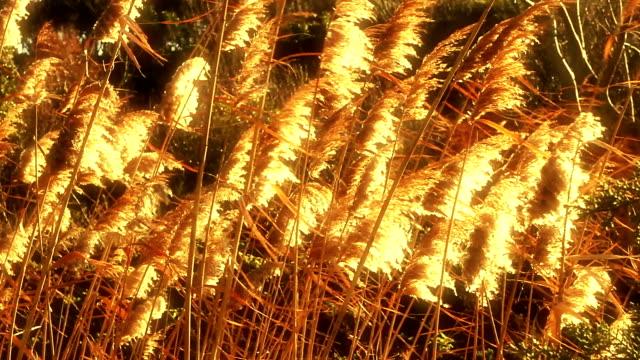 """""""Reeds"""""""