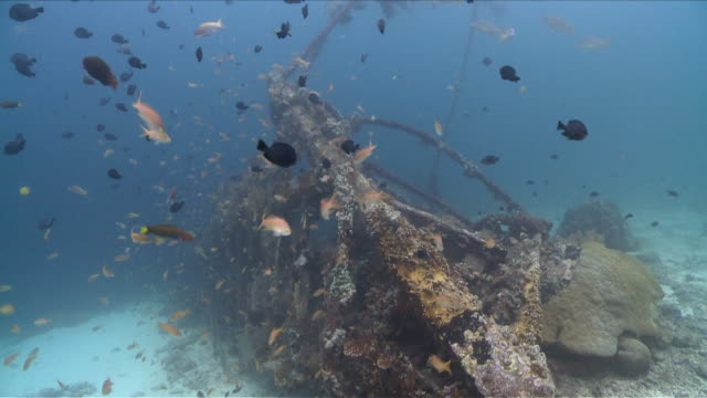 MS TU TD Reef on ship wreck  / Visayan Islands, The Visayans, Philippines