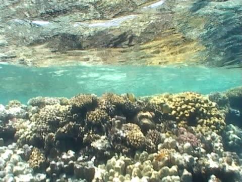 Reef seascape wide shot just below surface