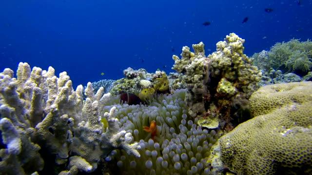 Reefscene