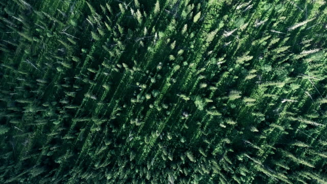 reen forest foliage aerial view woodland tree canopy nature background