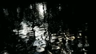 reflection in water
