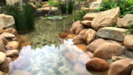 Reflection Pool and Rock Time-lapse
