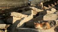 Relaxing Cat, Ephesus, Turkey