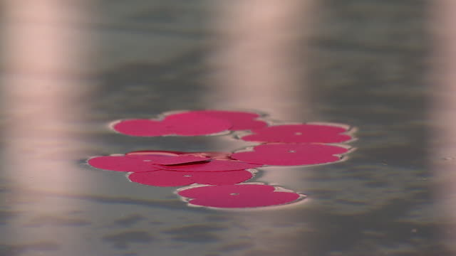 Rememberance poppy petals floating on water on Armistice Day