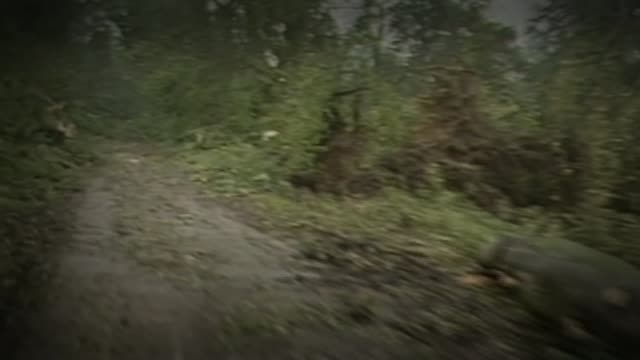 Remnants of Hurricane Ophelia heads towards the UK and Ireland Via AS211087027 / Near Sevenoaks Fallen trees along roadside TRACK