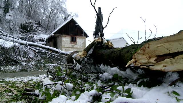 Removing Broken Trees Left By Sleet