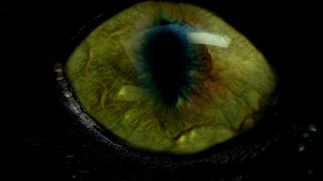 Rettile occhio