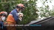 Rescatistas salvaron de una muerte segura a un perro que quedo atrapado en las estructuras de un edificio destruido por el terremoto ocurrido en la...